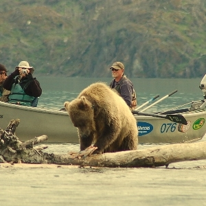 drift boats and brown bear viewing