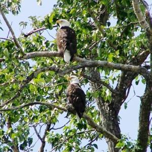 KENAI RIVER EAGLES