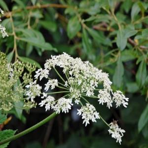 wildflower 5
