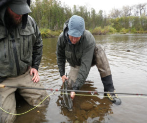 kenai peninsula steelhead fishing guide